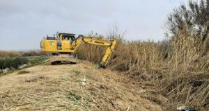 Trabajos en Buñuel para la eliminación de especies de flora invasora en el tramo medio del Ebro
