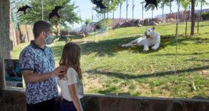 Sendaviva abre con nuevas instalaciones de felinos y de aves rapaces